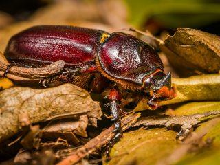 Bug - female