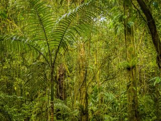 Forrest near Tamohon