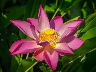 Bali Orchid Garden - Lotos